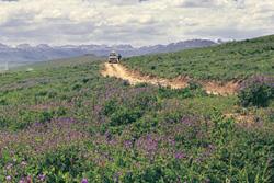 Deosai Plateau And Rupal Panorama