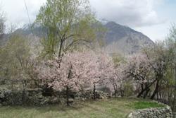 Spring Blossom Tour